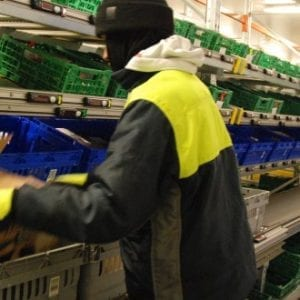 Warehouse automation provides 'new growth' for Riverford, the veg box pioneer