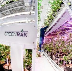 Montel Green Rak
