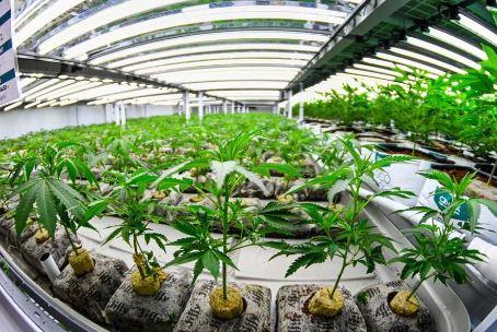 Cannabis facility racking
