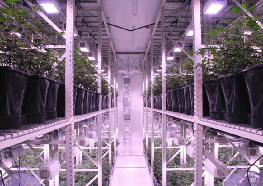 Indoor-vertical growing rack system