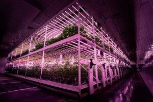 TSRgrow LED lighting